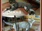 Скачать бесплатно изображение Стрижка собак Стрижка кошек и собак,тримминг, Выезд мастера на дом, 38411016 в Реутове