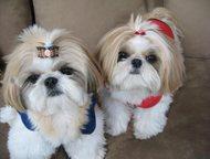 Профессиональная стрижка собак и кошек, Выезд на дом Предлагаю вашему питомцу ве
