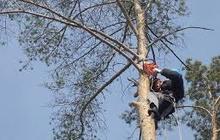 Спил аварийных деревьев, расчистка участков под строительство