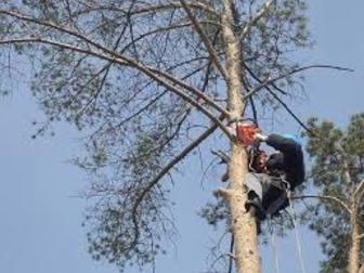 Увидеть изображение  Спил аварийных деревьев, расчистка участков под строительство,распиловка и вывоз, 60615205 в Рязани