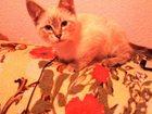 Foto в  Отдам даром - приму в дар Отдам котят только в хорошие руки! ! Из пяти в Ростове-на-Дону 0