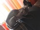 Фотография в Кошки и котята Продажа кошек и котят Прелесть, ласковое дитя готова к обретению в Ростове-на-Дону 10000