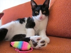 Фотки Домашняя кошка смотреть в Ростове-на-Дону