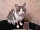 Увидеть фотографию Вязка кошек Арчик ищет кошечку для вязки 46012146 в Ростове-на-Дону