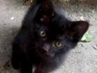 Свежее фотографию Отдам даром - приму в дар Черные бархатные котята в дар 2 месяца 66538007 в Ростове-на-Дону