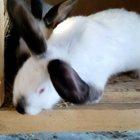 Продаю Калифорнийских кроликов