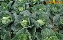Курс Технология выращивания овощных культур в открытом грунте