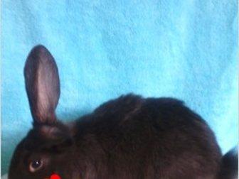Скачать фото  продаю крольчат 35286563 в Ростове-на-Дону