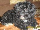 Скачать foto Найденные пропала собака 33066417 в Салавате
