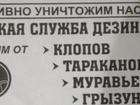 Изображение в Услуги компаний и частных лиц Разные услуги Избавим ваш дом от :  -Клопов  -Тараканов в Самаре 1000
