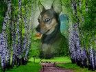 Увидеть изображение Вязка собак Ищем девочку 38490819 в Самаре