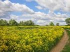 Увидеть foto Земельные участки Продам участок 17га (1700 соток) земли сельхозназначения  38537237 в Самаре