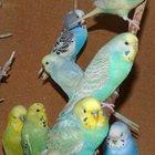 Крымские попугаи мелким оптом, Авто доставка