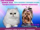 Фото в Домашние животные Услуги для животных Стрижка и тримминг собак всех пород и кошек в Санкт-Петербурге 0