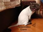 Уникальное изображение Услуги для животных Стрижка кошек, Выезд на дом Спб 33756424 в Санкт-Петербурге