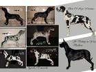 Фото в Собаки и щенки Продажа собак, щенков Вашему вниманию предлагаю очаровательных в Москве 50000
