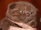 Изображение в Кошки и котята Продажа кошек и котят Очень красивые и ласковые мальчики ищут семью! в Санкт-Петербурге 25000