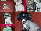 Изображение в Собаки и щенки Продажа собак, щенков Питомник предлагает большой выбор щенков. в Санкт-Петербурге 0