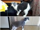 Стрижка кошек Спб выезд на дом в любой р-н