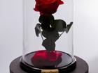 Роза в колбе, Красота из Северной Венеции