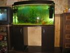 Уникальное фото  аквариум 200 литров с тумбой и декором 68207101 в Санкт-Петербурге