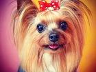 Скачать бесплатно фотографию Услуги для животных Стрижка собак и кошек, Любые породы, Без наркоза, Выезд на дом, 69716496 в Санкт-Петербурге