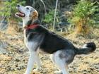 Просмотреть изображение Отдам даром - приму в дар Красивая молодая собака, воплощение уюта 69719544 в Санкт-Петербурге