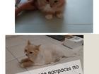 Скачать бесплатно фото  Стрижка кошек Спб Приморский район 70718694 в Санкт-Петербурге