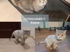 Просмотреть изображение Услуги для животных Стрижка кошек Спб Выборгский район 70723054 в Санкт-Петербурге