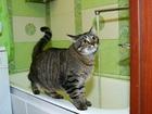 Просмотреть foto Услуги для животных Домашняя зоогостиница для вашего любимца 71880058 в Санкт-Петербурге