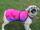 Скачать бесплатно foto  Ищет дом собака, в которую стреляли 71955107 в Санкт-Петербурге