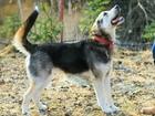 Скачать бесплатно foto  Необычная внешне молодая собака ищет дом 73071021 в Санкт-Петербурге