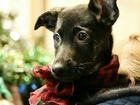 Просмотреть foto Отдам даром - приму в дар Очень красивый щенок ищет дом 73133205 в Санкт-Петербурге