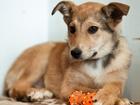 Скачать фотографию Отдам даром - приму в дар Маленький и трогательный щенок ищет дом 73152880 в Санкт-Петербурге