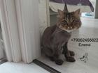 Скачать бесплатно foto Услуги для животных Стрижка кошек Спб Приморский район 73670451 в Санкт-Петербурге