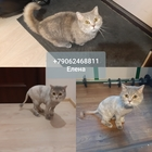 Стрижка кошек Спб Выборгский район