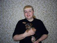 Вязки собак любых пород - инструктор Повяжу собак любых пород, мелких или крупны