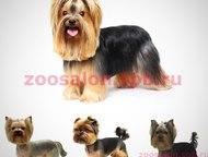 Стрижка собак и кошек, ультразвуковая чистка зубов В нашей сети салонов MasteGro
