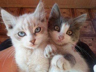 Смотреть фото  Отдам кошечек в добрые руки! 33618158 в Саранске