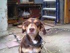 Фото в Собаки и щенки Продажа собак, щенков отдам щенков в добрые и заботливые руки. в Саратове 0