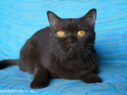 Фотография в Кошки и котята Продажа кошек и котят В качестве домашнего любимца за символическую в Саратове 6000