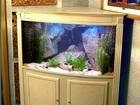 Фото в Рыбки (Аквариумистика) Дизайн и оформление Полный спектр услуг по обслуживанию аквариума в Саратове 900