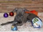 Изображение в Собаки и щенки Продажа собак, щенков Предлагаются к резервированию щенки породы в Саратове 1