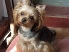 Просмотреть foto Стрижка собак Профессиональный груммер на дом 40196153 в Саратове