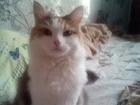Увидеть изображение Вязка кошек Красивая кошечка ищет себе котика для вязки 52230527 в Саратове