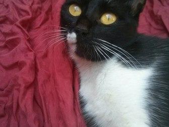 Свежее foto Отдам даром - приму в дар Кошка мышелов в добрые руки 37294239 в Саратове
