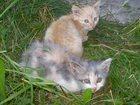 Фотография в Кошки и котята Продажа кошек и котят Отдам в добрые руки чудесных котят. Возраст в Сатке 0