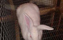 кроликов продаю