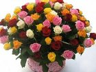 Увидеть фото Растения Живые цветы 33853535 в Шахты