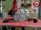 Скачать бесплатно foto  Стрижка котов в Симферополе 37729780 в Симферополь